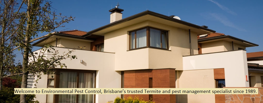 Termites Brisbane